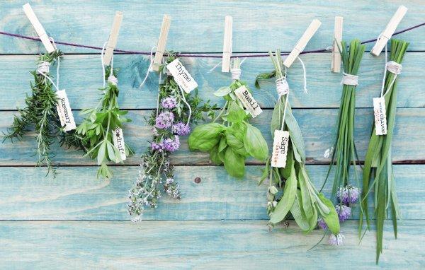 Viele Kräuter können die Fruchtbarkeit anregen (© Thinkstock)