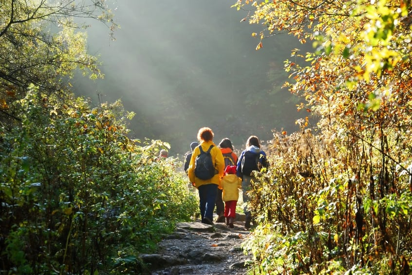 Sapziergang im Wald
