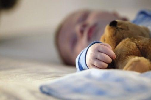 teddy der schläft