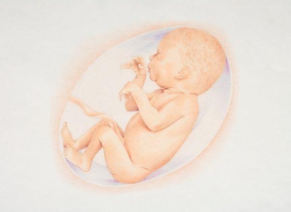 Erfolgreiche Gebärmuttertransplantation in Schweden (© Howard Pemberton / Thinkstock)