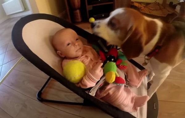 Charlie scheint seine Freundin Laura trösten zu wollen ©charliedadog/youtube