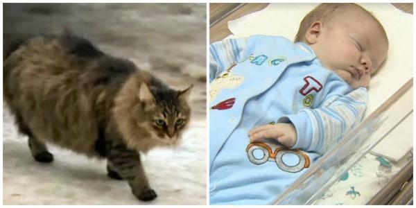 Katze Mascha kuschelte sich an den kleinen Jungen und rettete ihn damit © Screenshot/RuptlyTV youtube